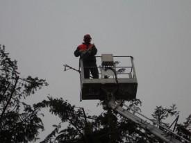 Baumpflege mit Hilfe eines Hubwagens
